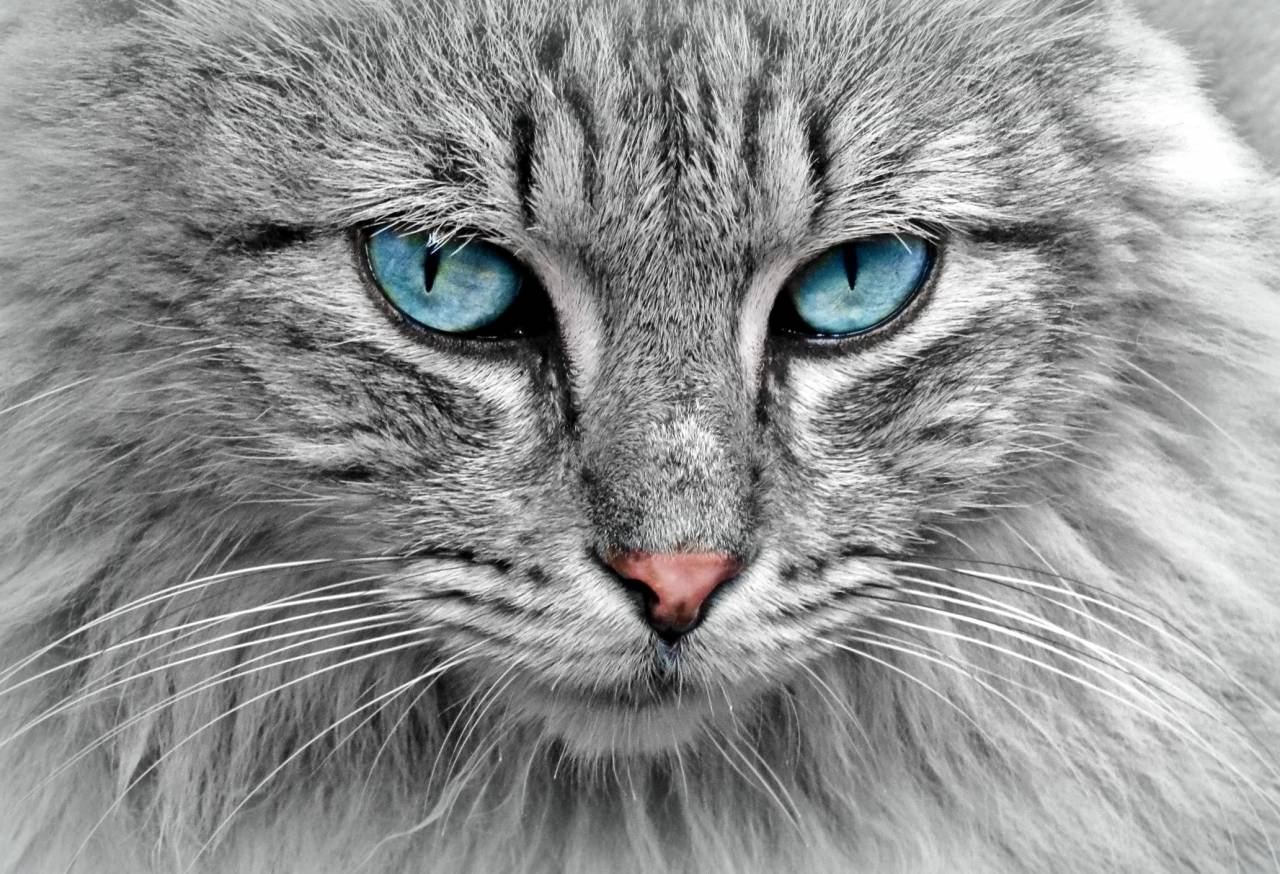On cat herding and securing web dependencies